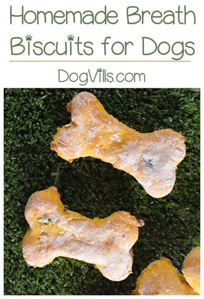 diy dog treats to help bad breath