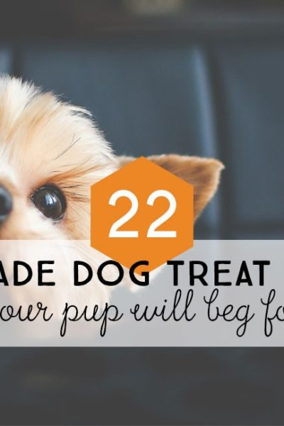 Post Header: 22 Homemade Dog Treat Recipes Your Pup Will Beg For
