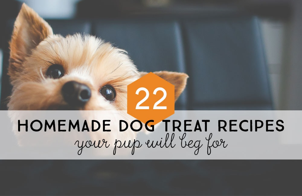 22 Homemade Dog Treat Recipes Your Pup Will Beg For